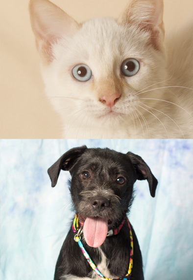 Pet Adoption in Gilbert
