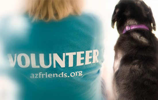 Volunteer with dog